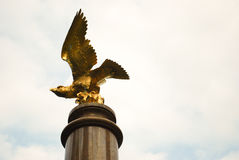 Boston College Golden Eagle Royalty Free Stock Photo