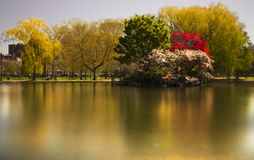 Boston Common. Golden Boston Common at a long exposure Royalty Free Stock Images