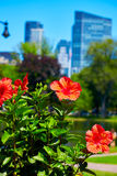 Boston Common park gardens and skyline Royalty Free Stock Images