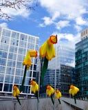 """Boston daffodils, public art. Public art installation """"20 Knots: Daffodils for Boston.""""  The twenty-foot-tall nylon daffodils in the Seaport area are stock image"""