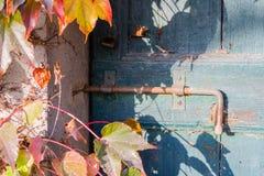 Boston-Efeu und alte Tür mit Bolzen Lizenzfreies Stockfoto