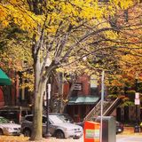 Boston in the fall royalty free stock photos