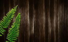 Boston fern leaves on wood background. With copy space Stock Photos