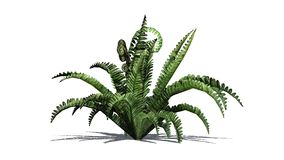 Boston fern plant. With shadow - isolated on white background Royalty Free Stock Images