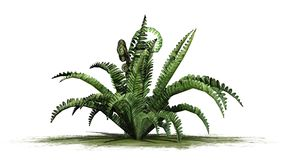 Boston fern plant on a green area. With shadow - isolated on white background Stock Images