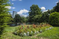 Boston Public Garden. The flowers are in bloom in Boston Public Garden Royalty Free Stock Image
