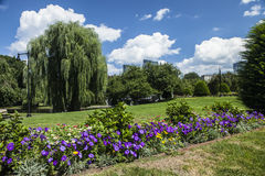 Boston Public Garden. The lovely Boston Public Garden in Massachusetts Stock Image