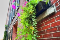 Boston gator för fyrkulle Fotografering för Bildbyråer
