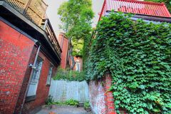 Boston gator för fyrkulle Arkivfoto