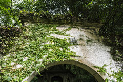 Boston ivy on gate of yard Royalty Free Stock Image