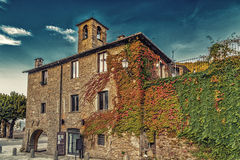 Boston Ivy in mountain village in Tuscany Royalty Free Stock Photography