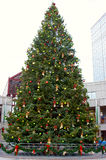 boston jultree Royaltyfria Foton