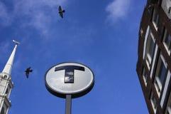 Arrêt et oiseaux de T Images libres de droits