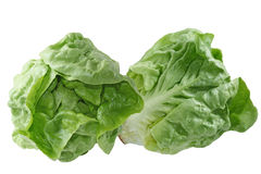 Boston Lettuce Royalty Free Stock Images