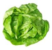Boston Lettuce Stock Photography