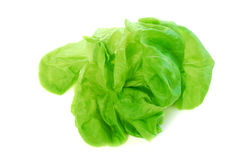 Boston lettuce Stock Image