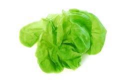 Boston lettuce. Head of green fresh boston lettuce isolated on white background stock image