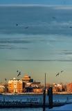 BOSTON, MASSACHUSETTS - JANUARY 04, 2014: Boston Cityscape with Flying Birds and Port Water Stock Photo