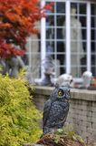 Boston, Massachusetts, USA – October 21, 2009: Owls and pumpki stock photography