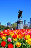 Boston miasto od tulipanu ogródu fotografia royalty free
