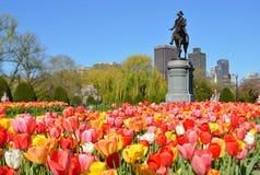 Boston offentlig trädgård Arkivfoton