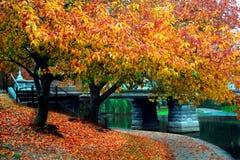Boston Public Garden stock image