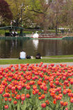Boston Public Garden Royalty Free Stock Photo