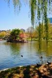 Boston Public Garden. In spring Royalty Free Stock Photos