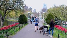 Boston Public Garden, Boston, USA, stock video footage