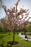 Boston Public Garden with first signs of spring Royalty Free Stock Photos