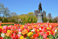 Boston Public Garden. George Washington Statue surrounded by tulips, tourists and beautiful spring colors Stock Photos