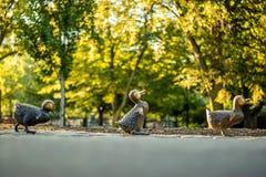 Boston Public Garden Royalty Free Stock Image