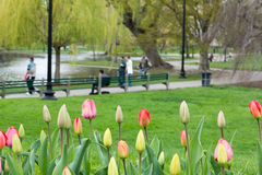 Boston Public Garden in the Spring Royalty Free Stock Images