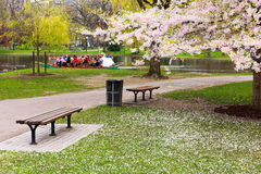 Boston Public Garden in the Spring Stock Photos