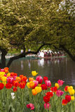 Boston Public Garden in the Spring Stock Photo