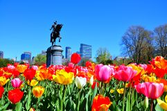 Boston stad från tulpanträdgård Arkivbild