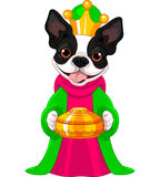 The Boston terrier as a Biblical Magi Royalty Free Stock Photography