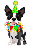 Boston Terrier Birthday Stock Photography