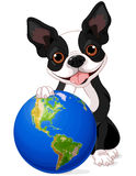 Boston Terrier Earth Day Stock Photos