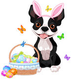 Boston terrier with Easter basket Stock Image