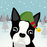 Boston Terrier Elf. A Boston Terrier dressed as an elf Royalty Free Stock Photos