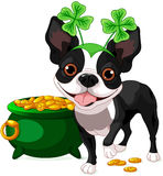 Boston Terrier feiert Heiliges Patrick Day Lizenzfreie Stockbilder
