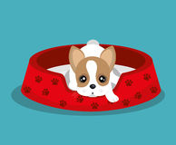 Boston terrier lying in red bed. Illustration eps 10 Stock Images