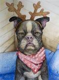 Boston Terrier met Rendiergeweitakken stock illustratie