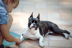 Boston Terrier och pojke royaltyfri fotografi