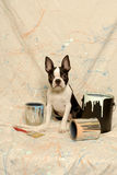 Boston Terrier and Paint Can Splatter. A little Boston Terrier puppy sits between paint cans and brush dribbled with different colored paint against a splattered Royalty Free Stock Photos