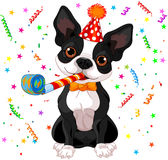 Boston terrier party Royalty Free Stock Photography