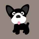 Boston Terrier Puppy. An illustration of a Boston Terrier Puppy Stock Photo