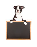 Boston Terrier Puppy Holding Blank Chalkboard Royalty Free Stock Photos