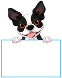 Boston terrier sign Stock Photos